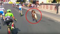 Watch this pony enter the Tour of Poland and race the cyclists