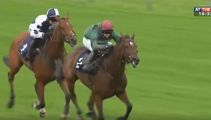 Jockey gets cocky and falls of their horse right before the finish line!